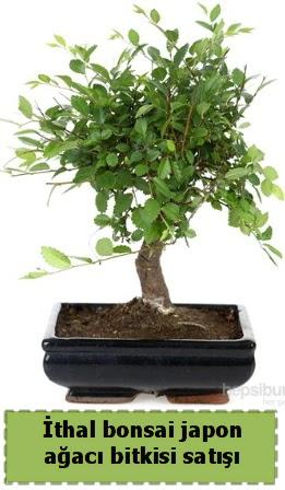 İthal bonsai saksı çiçeği Japon ağacı satışı  Ankara Anadolu Anadolu İnternetten çiçek siparişi