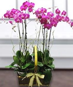 7 dallı mor lila orkide  Ankara Anadolu çiçek gönderme sitemiz güvenlidir