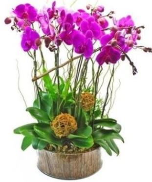 Ahşap kütükte lila mor orkide 8 li  Ankara Anadolu internetten çiçek satışı