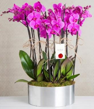 11 dallı mor orkide metal vazoda  Ankara Anadolu çiçek gönderme sitemiz güvenlidir
