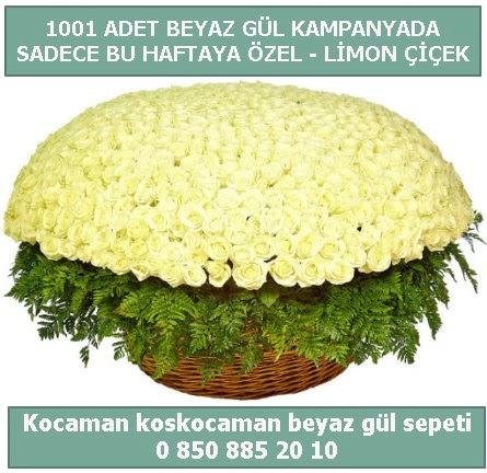 1001 adet beyaz gül sepeti özel kampanyada  Ankara Anadolu çiçek gönderme sitemiz güvenlidir