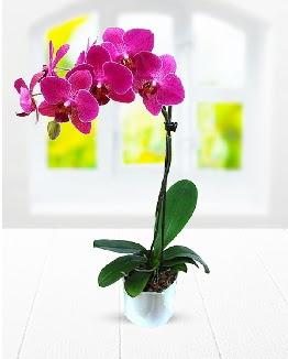 Tek dallı mor orkide  Ankara Anadolu çiçek satışı
