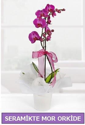 Seramik içerisinde birinci kalite tek dallı mor orkide  Ankara Anadolu Anadolu İnternetten çiçek siparişi