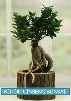 Kütük ağaç içerisinde ginseng bonsai  Ankara Anadolu çiçek gönderme sitemiz güvenlidir