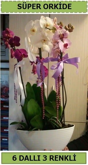 6 dallı 3 renk özel vazoda orkide çiçeği  Ankara Anadolu çiçek satışı
