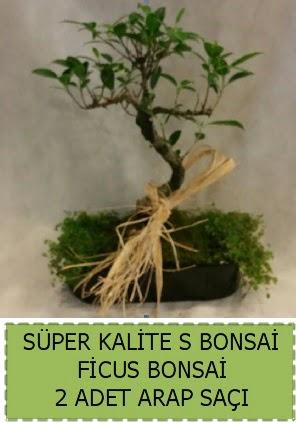 Ficus S Bonsai ve arap saçı  Ankara Anadolu çiçekçi telefonları
