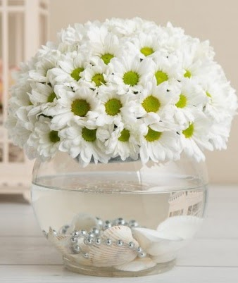 Fanusta beyaz Papatya  Ankara Anadolu çiçek satışı