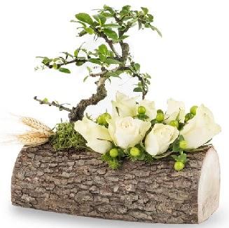 Doğal kütükte bonsai ağacı ve 7 beyaz gül  Ankara Anadolu çiçek gönderme sitemiz güvenlidir