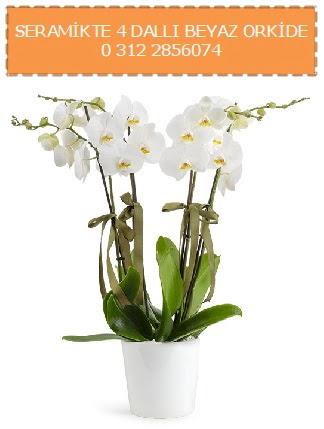 Seramikte 4 dallı beyaz orkide  Ankara Anadolu çiçekçiler