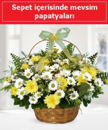Sepet içerisinde mevsim papatyaları  Ankara Anadolu ucuz çiçek gönder