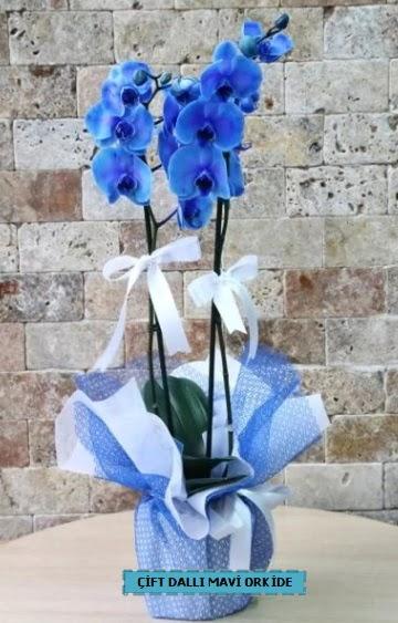 çift dallı ithal mavi orkide  Ankara Anadolu çiçek yolla