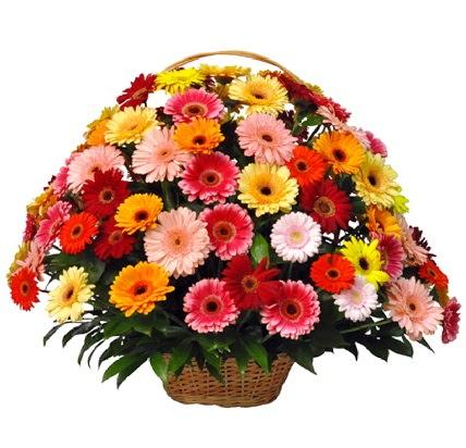 Karışık renkli büyük gerbera sepet aranjmanı  Ankara Anadolu çiçek gönderme sitemiz güvenlidir