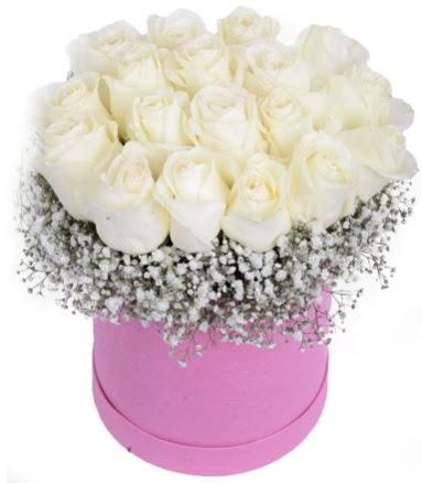 Renkli kutuda 19 adet beyaz gül  Ankara Anadolu internetten çiçek satışı
