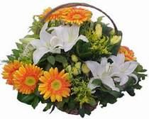 Ankara Anadolu online çiçekçi , çiçek siparişi  sepet modeli Gerbera kazablanka sepet