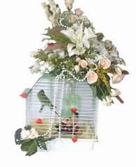 Ankara Anadolu uluslararası çiçek gönderme  Muhabbet kusu ve çiçekler