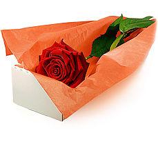 Ankara Anadolu çiçek mağazası , çiçekçi adresleri  Kutuda tek gül özel kisilere